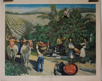 Vintage Macmillan School Poster: Harvesting Coffee Berries