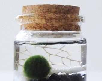Black & White Tides Mini Aqua Terrarium - Marimo Ball , Japanese Moss Ball, Living Home Decor, Gift, Plant, Sea Fan, Sea Shells