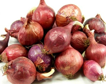 Red Onion Sets Organic | Red Baron Onion Bulbs Spring Shipping 8 oz. - Non-GMO Spring Shipping