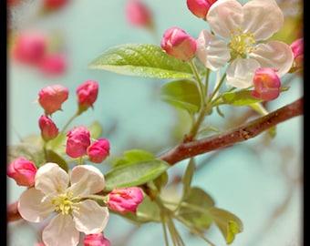 Greeting Card, Modern Vintage, Apple Blossom, Spring, Ttv, Retro, Blank.
