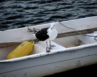 Nautical Decor, Rockport, Seagull Photography, Seagull Print, Bird Photography,Bird Print,Boat Photography,Boat Print,seagull walla rt