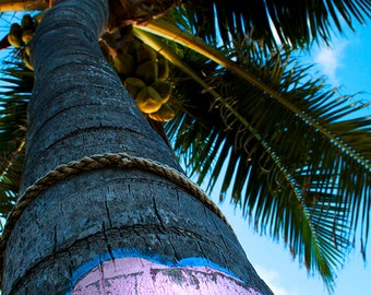 Bahamas Palm Tree Canvas Print