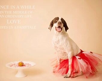 SALE - Valentine doggie tutu / Red or pink dog tutu