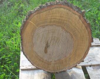 Slice of oak irregular shape suitable as home decor or craft work