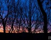 Sunset Photograph, Nature Photo Print, Large Wall Art, Blue Orange Black, Winter Trees Silhouette, Sunset Sky, Oversized Art, Home Decor