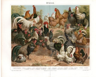 1893 Antique Bird Print Poultry Chickens Lithograph German Double Page Natural History