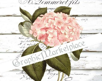 Hydrangea Hortensia Flowers Shabby Instant Download  Transfer Burlap digital sheet graphic printable No. 848