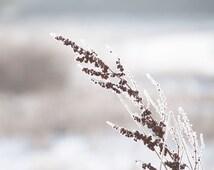 Snowy Winter Grass, Winter Nature Photo, Oregon, Rustic, Delicate Frost, Earth Tones, White, Cream, Chocolate Brown, 8x10 Photo Print