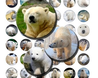 Polar Bears Baby Arctic Zoo Animals Digital Images Collage Sheet 1 inch Circles INSTANT Download BC60