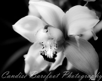 Orchid, Black and White Photography, Flower Photography, Spring Flowers, Nature Photgraphy