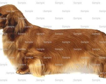 Long Haired Dachshund Dog Birthday - Edible Cake and Cupcake Topper For Birthday's and Parties! - D468