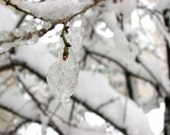 Ice Drop, Snow Branches Photography, Winter Ice Photo, Ice Branches , White Snow Photography,  Fine Art Photography - FatePhoto
