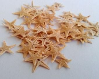 Tiny Tan Starfish - 50 pcs