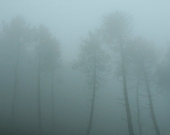 Mist, photography, fine art print,