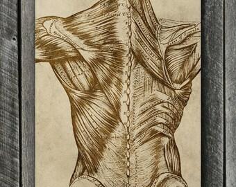 Vintage Back Anatomy Digital Print - Medical Poster - Beige & Brown Shabby Medical Anatomy Print - Chiropractor Spine Art