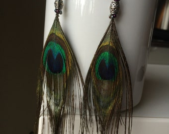 Peafowl Feather Earrings