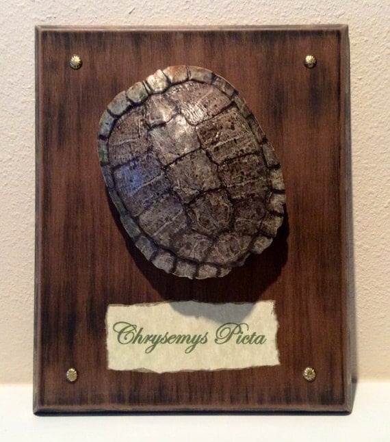 Turtle Shell Home Decor Beach House Home Decor By