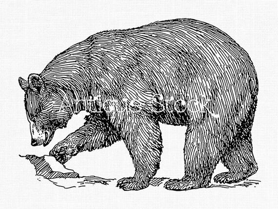 One Line Art Bear : American black bear clipart animal line art drawing instant