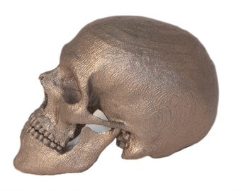Your own Skull 3D Printed Skull from CT Scan - Custom 3D Printing