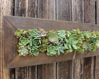 Indoor/Outdoor Living wall. 100% Handmade Cedar Succulent Hanging Planter. Awesome Gift!