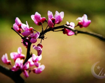 Nature Photography.  Garden and Flower Photography. Spring and Summer Photography. 8x12 Print