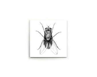 The Fly Magnet