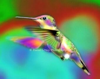 Dude, Where's the Nectar - 8x10 Psychedelic Hummingbird Fine Art Photo