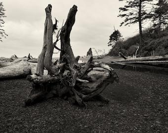 Beach Photography, Driftwood, Black and White Fine Art Landscape Photography, Monochrome, Nature, Ocean Wall Art, Beach Home Decor, Zen