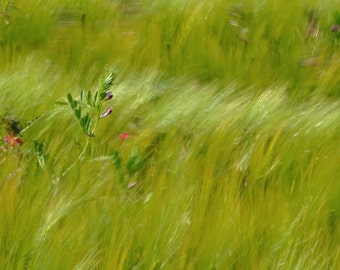 field in the immediat_effet impressionniste_ vent_telechargement photography nature printemps_Provence