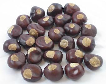 Buckeye Nuts - One Hundred Nickel Size