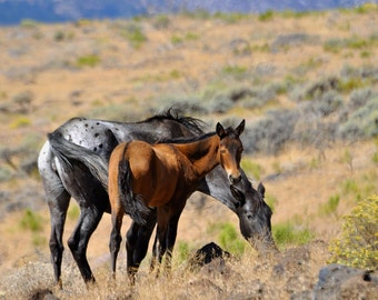 Wild Horse Fine Art, horse art, horse photography, wild horse, wild mustang, Mare and Foal