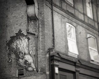 Graffiti Photography, Street Art, London Photography, Fine Art Print, Contemporary Wall Art, Urban Photography, ROA Rat