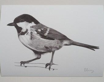Coal Tit Illustration Giclee Print, A5