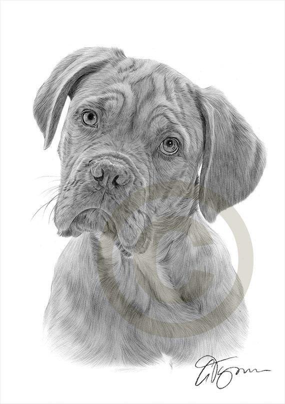 Super Matita di Dogue De Bordeaux cane disegno opera di formato A4 BN24
