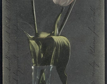 vintage postcard 1909 Tulips in Vase