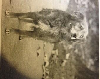 Adorable Pup - 1950s snapshot