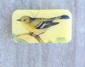 Bird Pill Box, Slider Tin, Mint Tin, Vintage bird