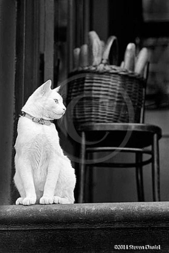 White Cat Photo, Cats, White Cat, Brooklyn NY
