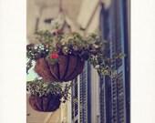 "New Orleans French Quarter Art - ""NOLA Hanging Baskets"" shuttered doors photograph louisiana photography  fine art print"