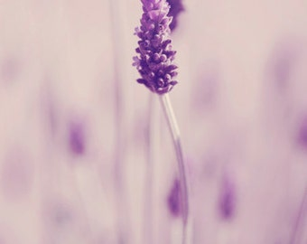 Flower  Photography nature photography Lavender photography spring decor purple  pastel ethereal wall art  Fine Art Photography Print