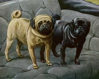 Pug Dog Print,1910s Antique Louis Agassiz Fuertes Dog Illustration Art Wall Decor