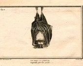 bat hanging upside down suspended by his feet print glorious creepy nature print