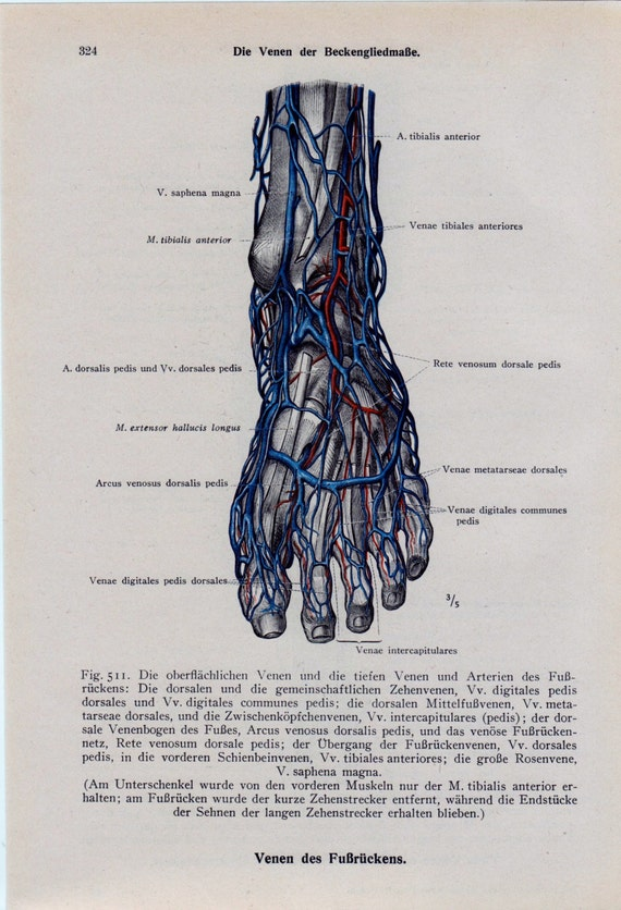 Toe Anatomy Diagram - 28 Images