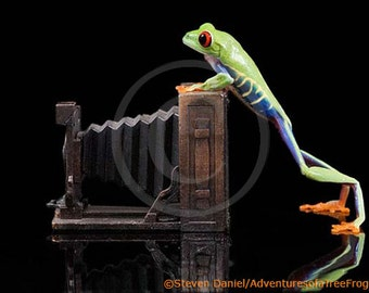 Photographer, A LIVE Frog and Old Fashioned View Camera, Frog Portrait Photograph