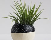 Black and White Color Block Speckled Air Plant Pod with Air Plant