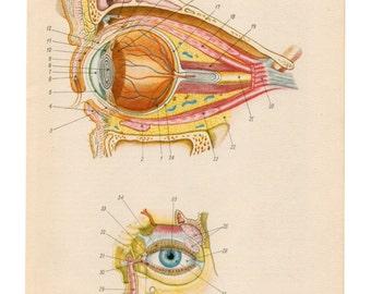 Medical Diagram eye upcycle recycle repurpose blood veins illustration Vintage Anatomical Anatomy Print Paper Ephemera home decor wall