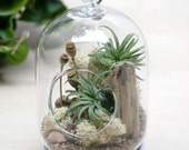 Poppy Seed Tabletop / Hanging Air  Plant Terrarium - Air Plant, Tillandsia, Gift, Hanging Terrarium, Reindeer