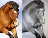 Photo-realistic pencil portrait of your pet or favourite photograph