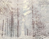 Nature Photography, Forest, Snow, Winter Sun, Fairytale, Frosty, Trees. - Fizzstudio