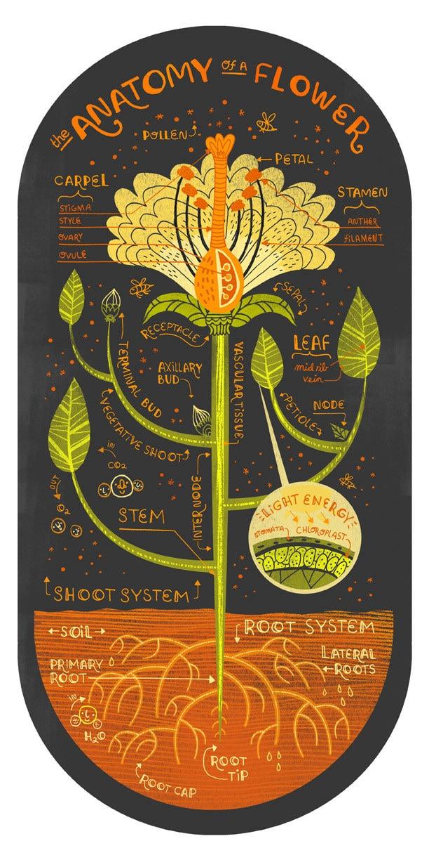 The Anatomy Of A Flower Art Print